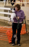 Blue Ridge Agility Club Trials Western North Carolina Ag Center
