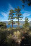 Poderosa Pines of Knox Mountain