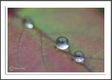 Dew Drop In