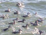 Duck LT CBBT 1-09 a.JPG
