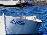 Gull Glaucous ESVA 1-09 ab.JPG