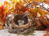 Finch House Nest a.JPG
