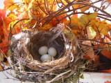 Finch House Nest b.JPG