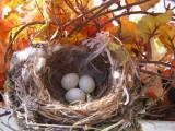 Finch House Nest c.JPG