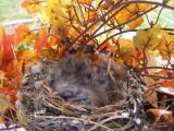 Finch House Nest e.JPG