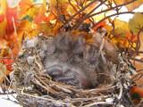 Finch House Nest g.JPG