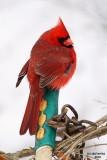 cardinals_orioles_etc