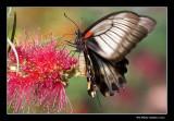 Papillons en liberté 2010