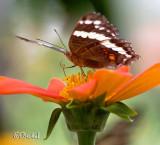 Nectar Sipper