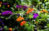 A Butterfly's Dream World