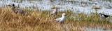 Birds of Miranda