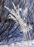 Frost Bitten