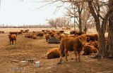 The Nearby Herd