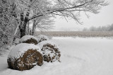 Fresh snow and old corn