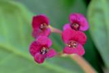 Macro Pink 1.jpg