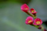 Macro Pink 3.jpg