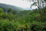 View down the Arima Valley from the AWC balcony