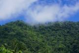 Arima Valley Rain Forest