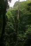 The Guacharo Trail