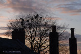 Rooks and chimneys.
