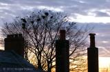 Sunset - 11.04.10.