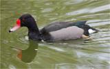 Rosey Bill Duck.