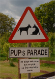 Pups Parade.