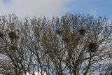 The Rookery.