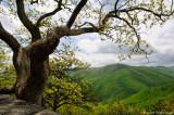 Roadtrip: Sights and sightings in Virginia