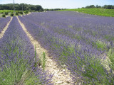 Provence 2009 004.jpg