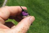 2008 West Hummingbird Banding - Fred Bassett