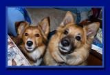 Connor & Chico