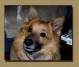 Chico, The Older Gentleman