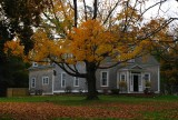 Loosing Leaves