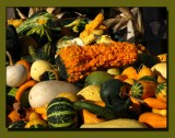 Fascinating Gourds