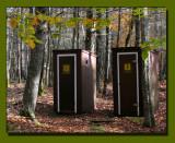 Relief In The Woods