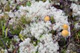 Lichen and Musrooms
