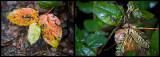 Wet leaf composite