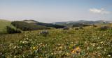 Wildflowers, Northeast Wyoming