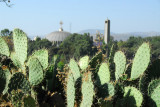Cactus with St. Mary of Zion, Axum