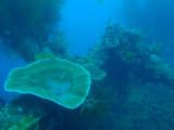 Kogyo Maru wreck