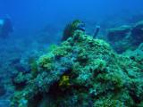 Coral head, Cadlao Tip, El Nido