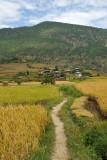 Path through the rice fields