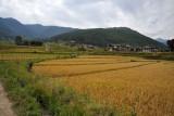 Rice terraces around Lobesa