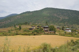 Hiking through the rice fields back from Chimi Lhakhang