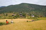 Villagers passing through the fields