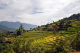 Driving up along the rice terraces to reach the Zangdhopelri Hotel
