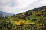 The Zangdhopelri Hotel is among the rice terraces high above Punakha