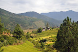 These rice terraces are about 5 km south of Punakha Dzong