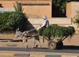 Donkey cart, Omdurman